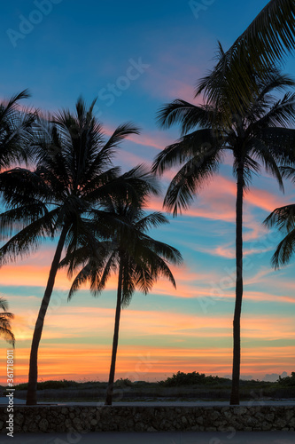 Palm trees on Miami Beach at sunrise in Ocean Drive, South Beach, Florida