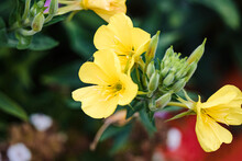 A Close Up Of Several Yellow E...