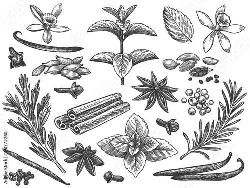 Fototapeta Engraved spices. Cardamom, vanilla flower and pod. mint, black pepper and rosemary, cloves. Indian cooking seeds hand drawn vector set. Ingredients for culinary, cooking herbs seamless pattern obraz