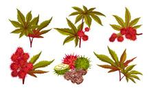 Ricinus Or Castor Oil Plant Wi...