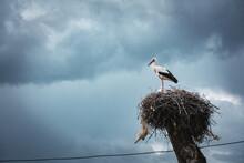 Stork In The Nest