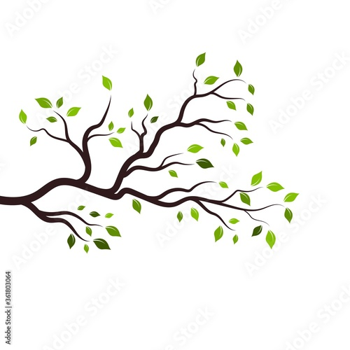 Photo Tree branch vector ilustration design