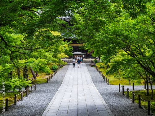 京都 南禅寺 法堂に続く参道 Wallpaper Mural