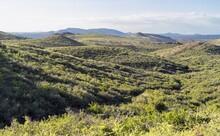 Placerita Hills