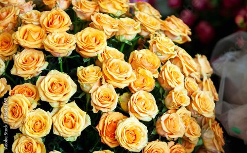 Fotografia Conjunto de rosas laranjas. Ramalhete de flores cheio.