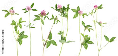 Obraz Clower flower stems - fototapety do salonu