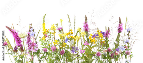 Flowering wild grass and herbs isolated on white background. Border of meadow flowers wildflowers and plants.. - 361853486