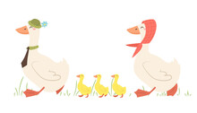 Dad And Mom Geese With Goslings. A Family Of Geese Walks. Vector Illustration In Cartoon Flat Style.