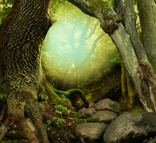 Fantasy Forest With Old Mossy ...