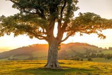 Abandoned Tree When Sun Rays P...