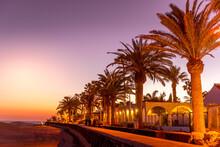 Palm Trees On The Beach Captur...
