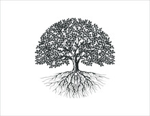Tree And Roots Vector Silhouette In Circle Shape
