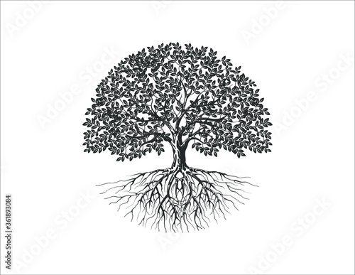Obraz na plátne Tree and roots vector silhouette in circle shape