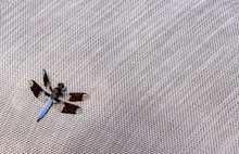 Dragonfly On Linen Texture Background