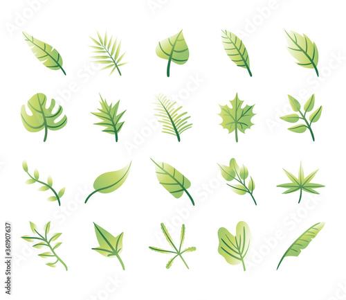 Cuadros en Lienzo bundle of leafs plants set icons