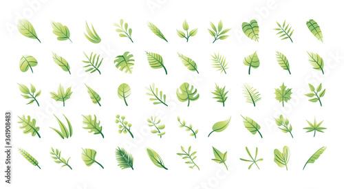 Fotografía bundle of leafs plants set icons