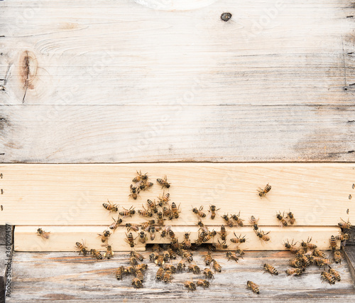 Close up of honey, bees, some with full pollen baskets. Wallpaper Mural