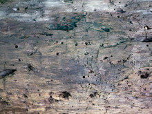Old Wood Surface Is Porous Tex...