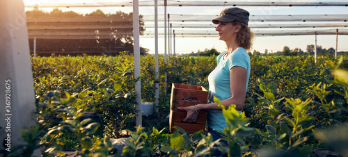 Obraz na plátně Modern woman working and picking blueberries on a organic farm - woman power business concept