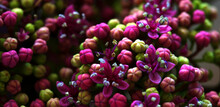 Close Up Of Flower Buds Just B...