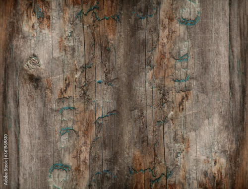 Fototapeta Wooden texture - natural wood. Background of an old wooden fence. For design. Weathered wood. Abstract background obraz