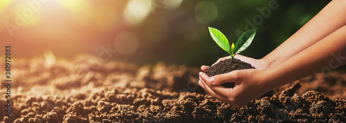 hand holding small tree for planting. green world concept Fotobehang