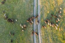 A Flock Of Sheep Runs Along A ...