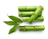 Branches of bamboo isolated