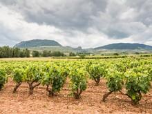 Beautiful Scenery Of Vineyards In La Rioja, Spain At Daytime