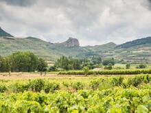 Beautiful Scenery Of Vineyards In La Rioja, Spain At Daytime