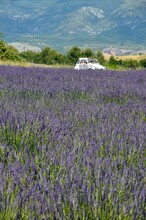 Lavender Field In Provence, Valensole, France, White Vintage Car, Mountains In The Background