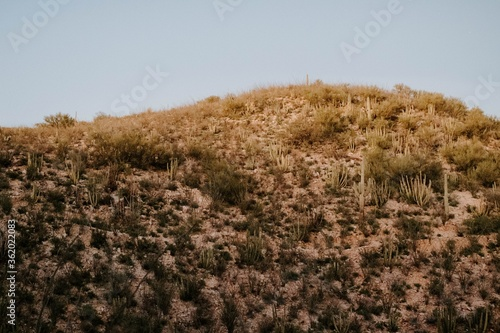 Low angle shot of a hillside covered with dry grass and plants Canvas Print