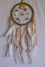 Sea Shell Decoration. Dream Ca...