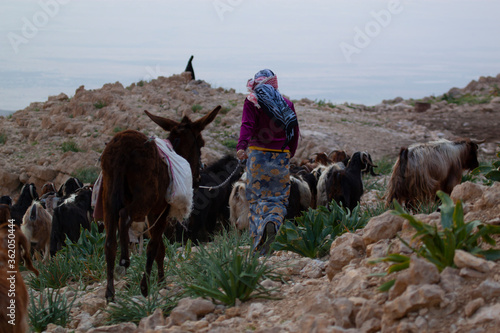 Fotografie, Tablou Close up photo of a slim girl in traditional dress and wearing headscarf as she brings the goat herd to pasture through rough and rocky terrain
