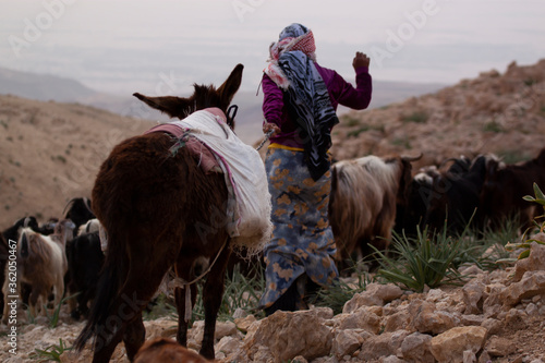 Close up photo of a slim girl in traditional dress and wearing headscarf as she brings the goat herd to pasture through rough and rocky terrain Fototapet