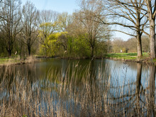 Spring In The Park, With Refle...