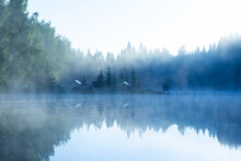 Fog On The Lake At Dawn, Fores...