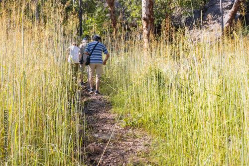 Fototapeta Hiking in Tall Grass in Australia