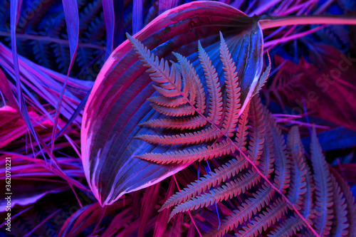 Tropical leaf forest glow in the black light background. High contrast