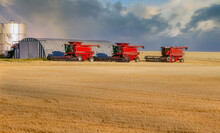 Combines In A Golden  Field Of...