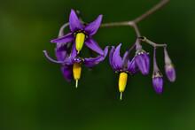 Beautiful Wild Purple And Yell...