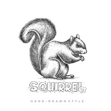 Vector Squirrel With Hand Draw...