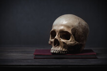 Still Life Of Human Skull That...