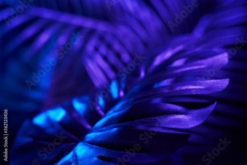 Creative tropic purple leaves layout.