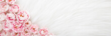 Fresh Pink Roses On Light White Fluffy Fur Blanket Background. Beautiful Flower Wide Banner. Closeup. Empty Place For Inspirational Text, Lovely Quote Or Positive Sayings. Top Down View.