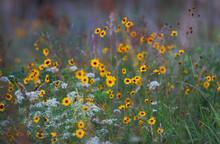 Wildflowers In A Meadow In Okl...