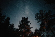 Starry Night In A Pine Forest
