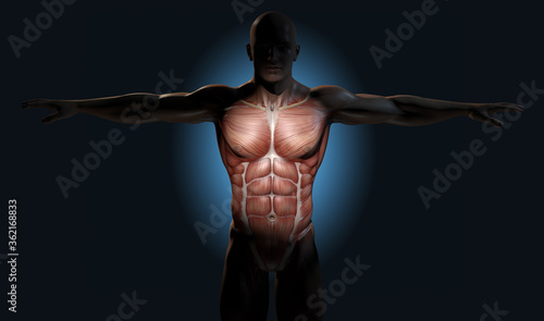 Photo Front muscles, major anterior muscles. Medically 3D illustration