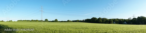 Fotografie, Obraz High Voltage Electricity Pylon over Wheat Field in Summertime - Panorama