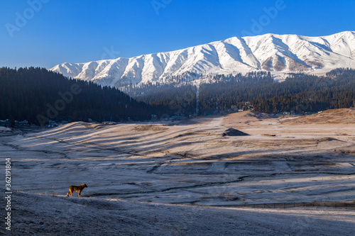 A dog standing on terrains of Himalayan Mountains in Gulmarg Canvas